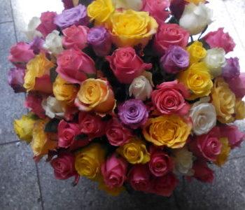 Kód: L020  obsah:  Mix 60 růží